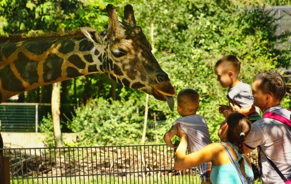 paseo zoologico